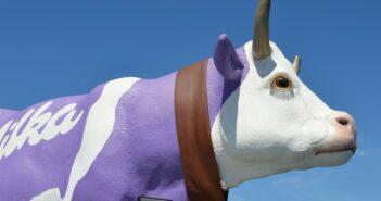 #MUHBOOT: Die Kuh, die übers Wasser läuft