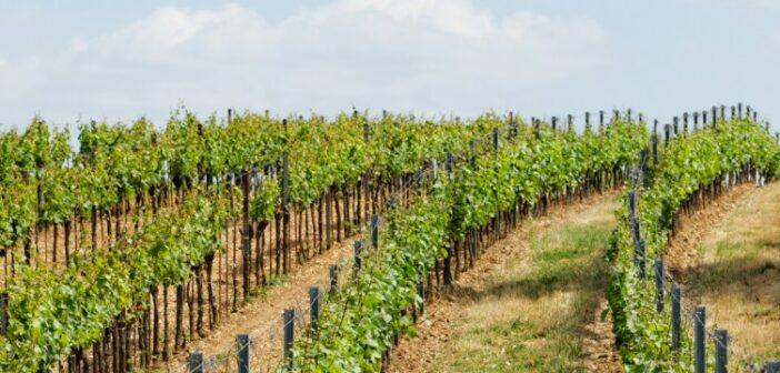 Weingut Saaler (Saulheim) als einer der Sieger