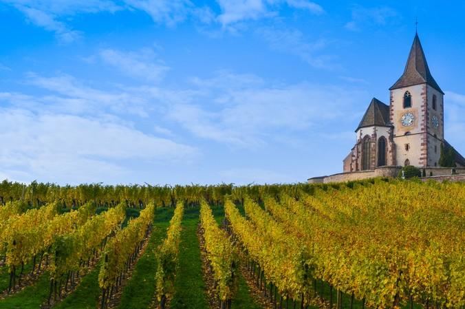 """Der Weinberg, auf dem die Reben für den Cremant d'Alsace wachsen, gehört zu den ältesten in Frankreich. (#"""""""