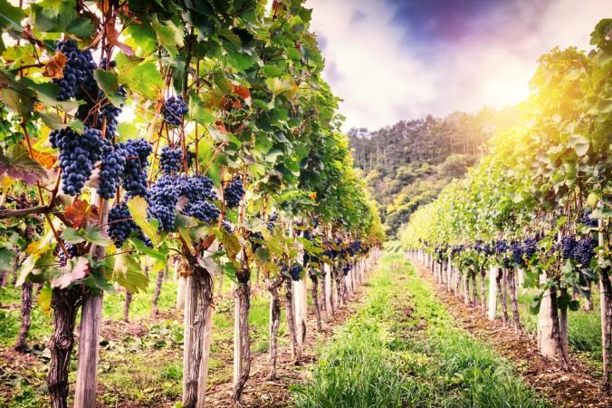 Gibt es Bessseres als eine Wanderung mit einem Gläschen Cremant durch die idyllischen Weinberge Frankreichs. (#3)