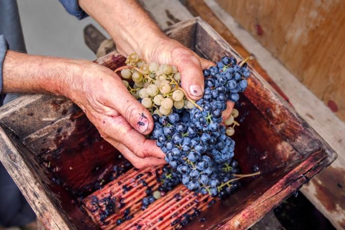 Der Unterschied zwischen Cremant und Champagner liegt zum Beispiel in der Herstellung und der Anzahl der Trauben (#4)