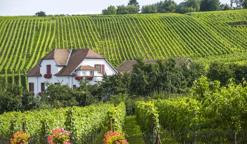Die weltweit einmaligen, kreidehaltigen Böden in dem Gebiet im Nordosten Frankreichs zwischen Reims und Troyes sind maßgeblich für die Qualität des Champagners verantwortlich. (#02)