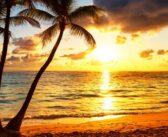 Kokosöl: Multitalent für Küche, Gesundheit und Beauty
