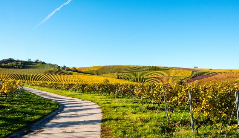 In der Nähe von Mainz wachsen viele berühmte Rot- und Weißweine. Ein idealer Landstrich für Weinliebhaber. (#2)